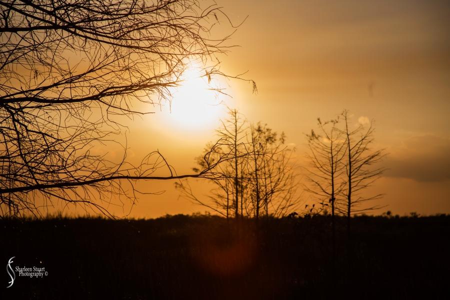 A.R.M Loxahatchee National Park: February 239, 2017: 8350