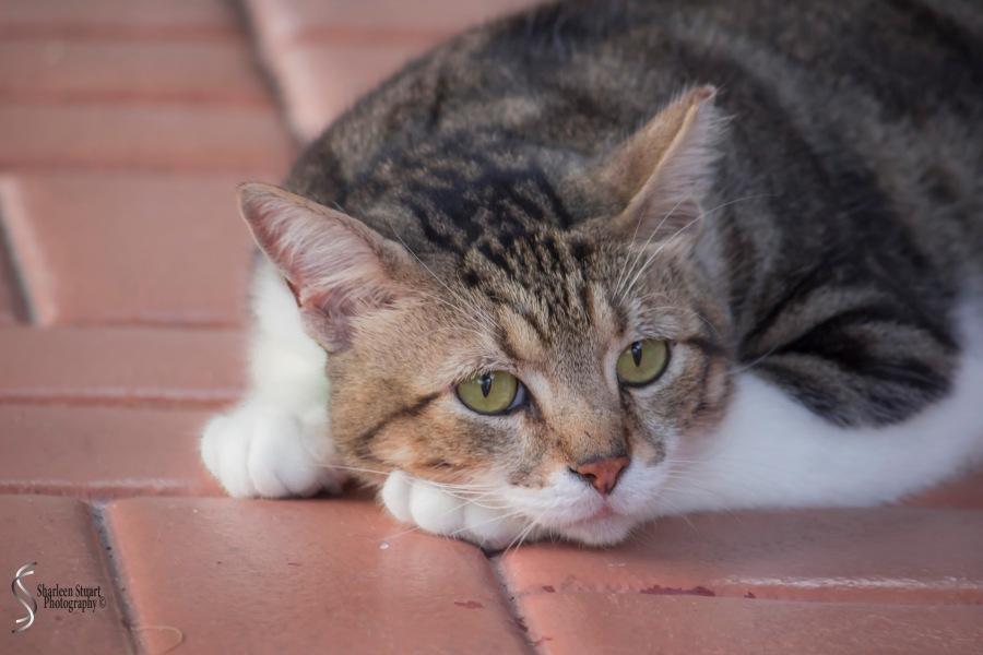 Mr Cool Cat: September2, 2015 8151