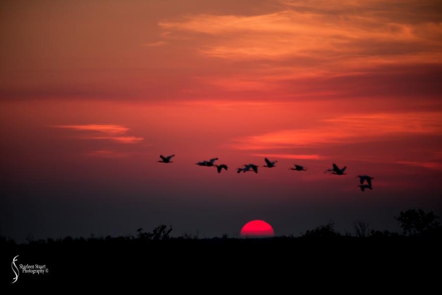 A.R.M Loxahatchee National Park: January 26, 2017: 7239