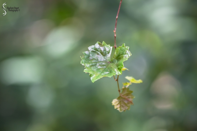 ARM Loxahatchee National Park: April 21, 2017: 2528