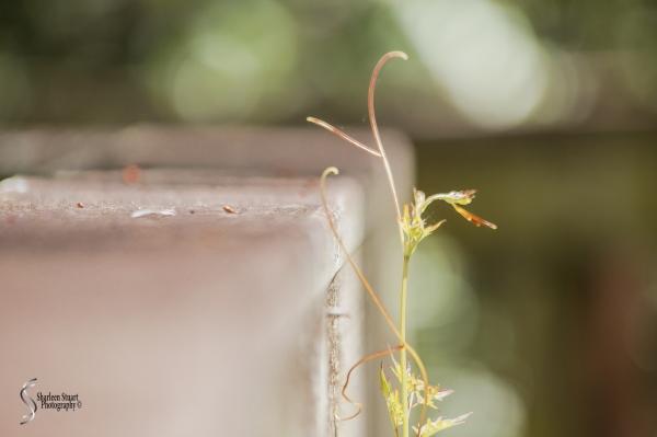 ARM Loxahatchee National Park: April 21, 2017: 2530