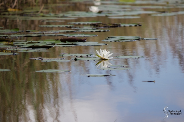 ARM Loxahatchee National Park: August 6 2017: 4964