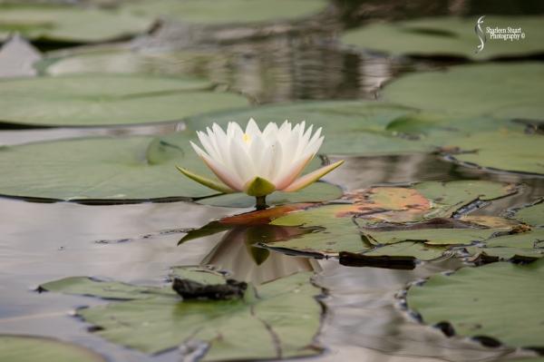 ARM Loxahatchee National Park: August 6 2017: 4967