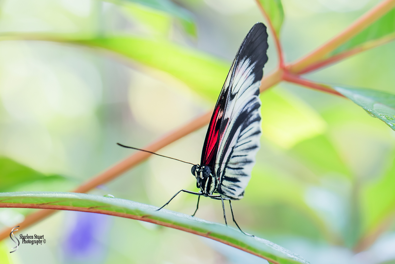 Butterfly World: June 16, 2017: 4455