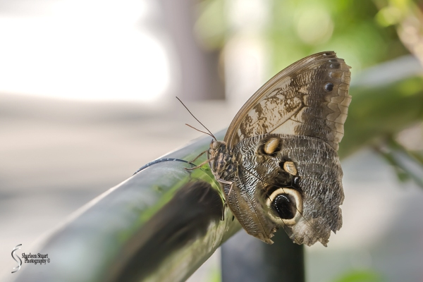 Butterfly World: June 16, 2017: 4487