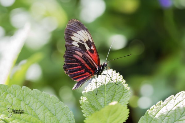 Butterfly World: June 16, 2017: 4539
