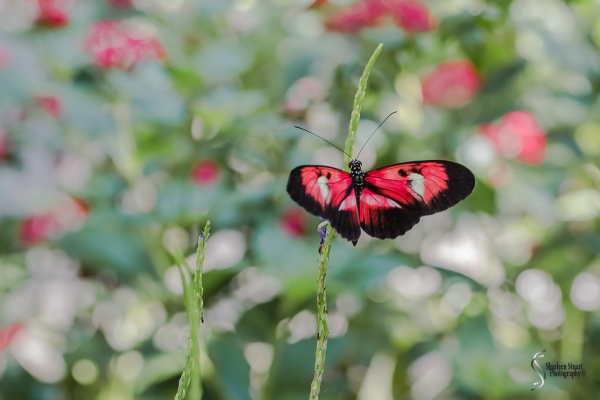 Butterfly World: June 16, 2017: 4543