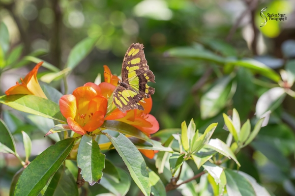 Butterfly World: June 16, 2017: 4606