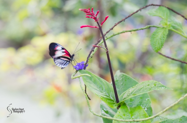 Butterfly World: June 16, 2017: 4626