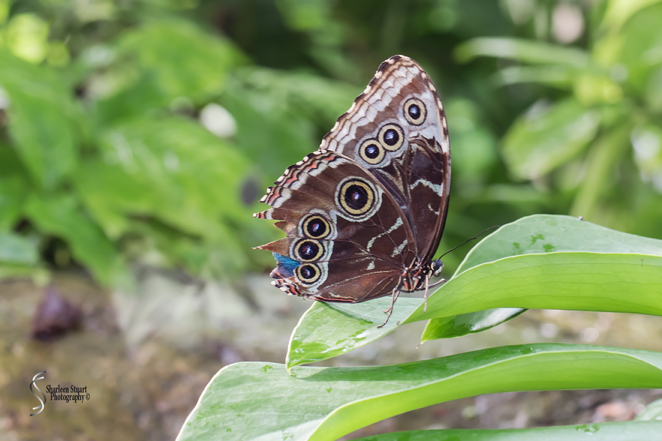 Butterfly World: June 16, 2017: 4627