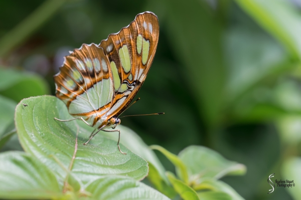 Butterfly World: June 16, 2017: 4803