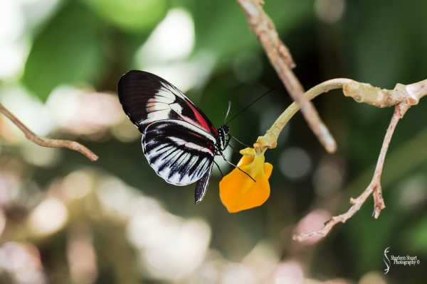 Butterfly World: June 16, 2017: