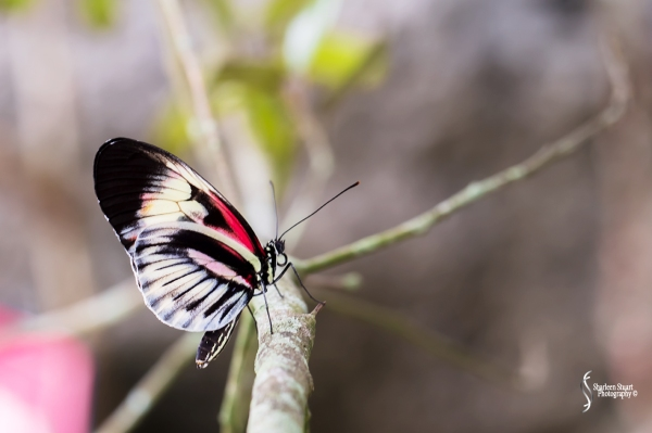 Butterfly World: June 16, 2017: 4830