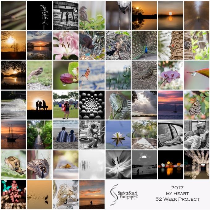 2017 P52 collage