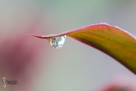 Reflections in the waterdrops