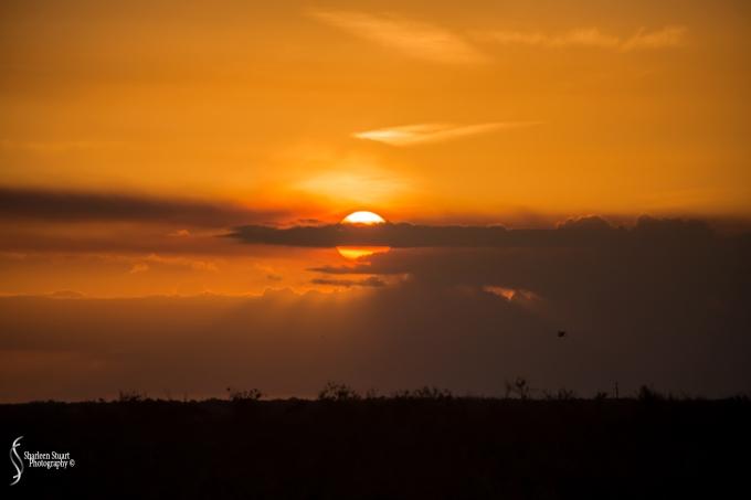 ARM Loxahatchee National Park: February 8, 2018: 0681
