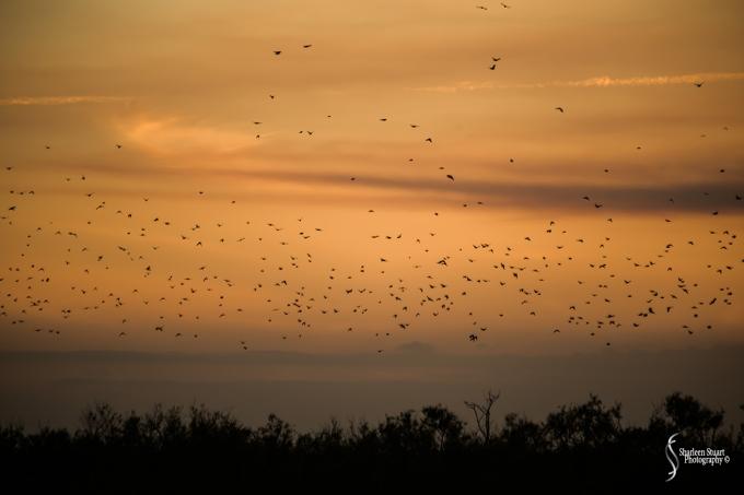 ARM Loxahatchee National Park: February 8, 2018: 0692