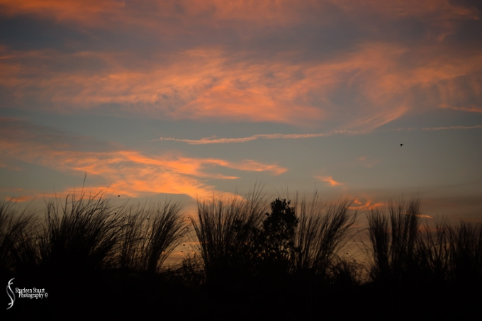 ARM Loxahatchee National Park: February 8, 2018: 0769