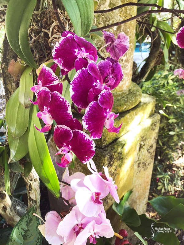 Orchids:  May 8, 2018: 9125