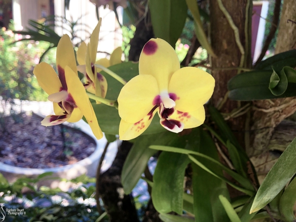 Orchids:  May 8, 2018: 9128