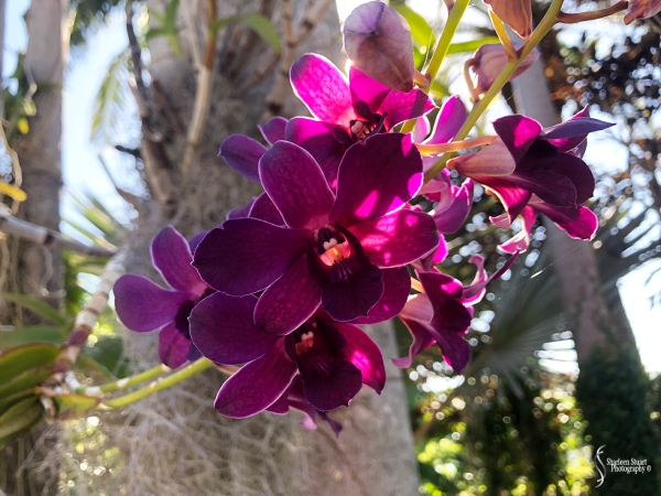 Orchids:  May 8, 2018: 9129