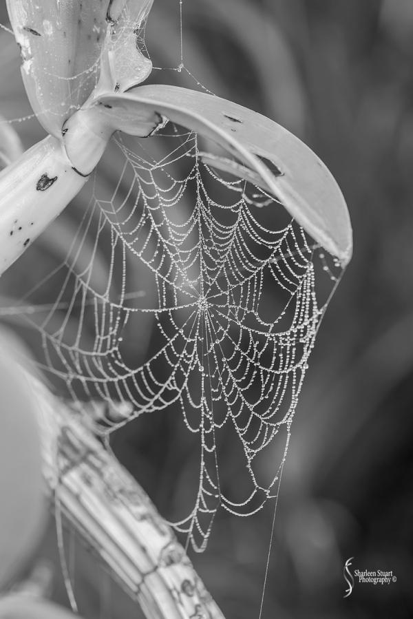 Spiderwebs:  January 16, 2016 3646