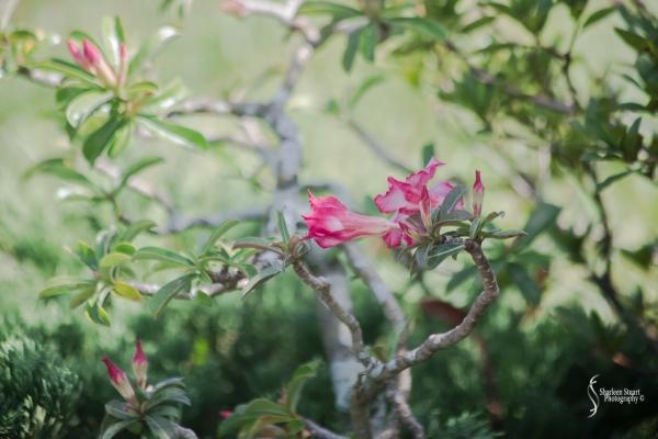 Morikami Japanes Gardens &  Museum: August 10, 2018: 7804