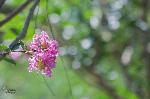 Morikami Japanes Gardens &  Museum: August 10, 2018: 7823