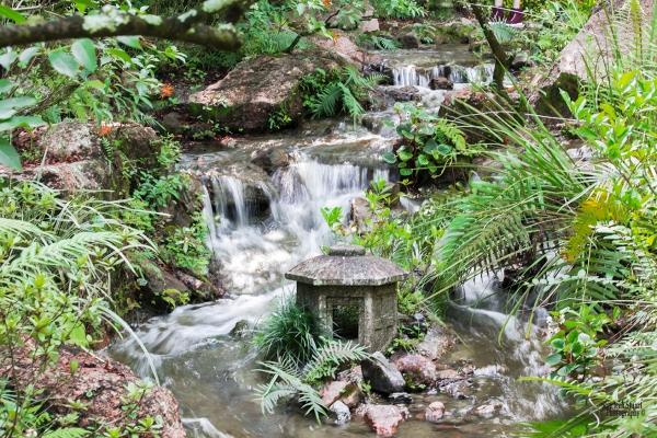 Morikami Japanes Gardens &  Museum: August 10, 2018: 7925