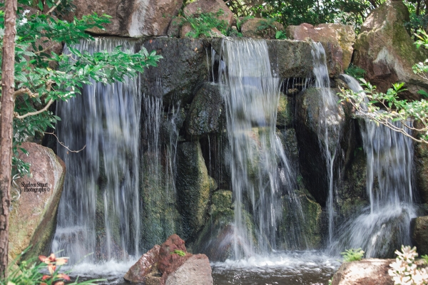 Morikami Japanes Gardens &  Museum: August 10, 2018: 8104