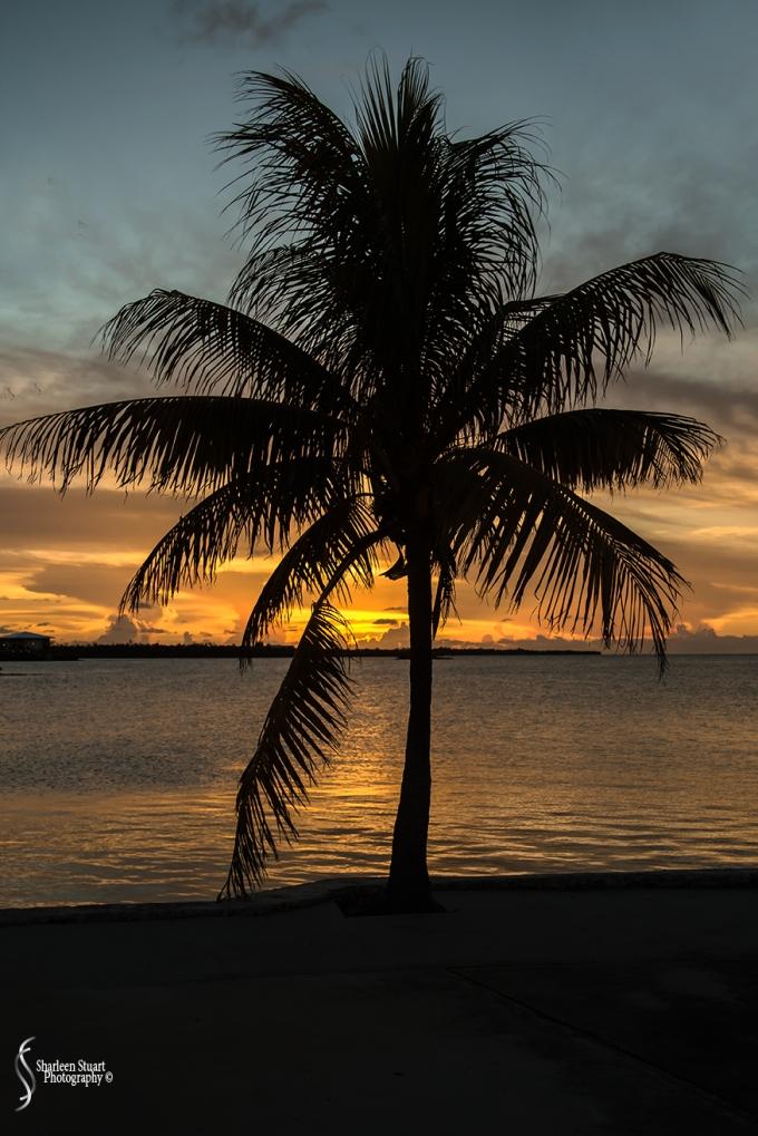 Marathon/Key West Vacation:  August 17-22, 2018: 8728
