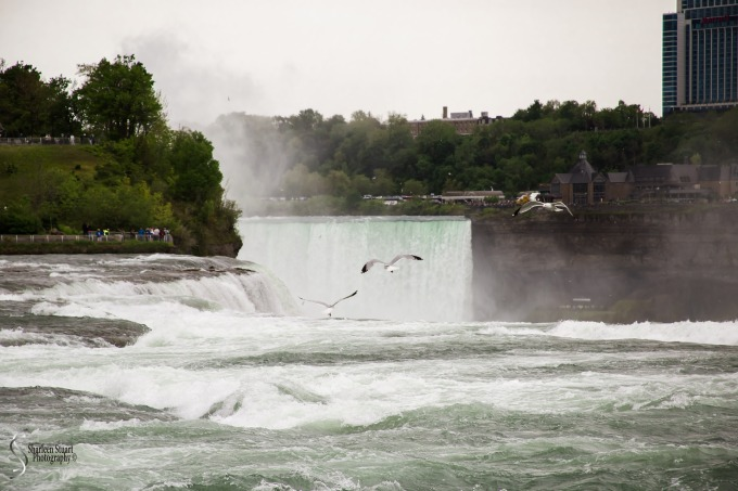 Niagara Falls and Rochester:  June 4-7, 2019: 5946