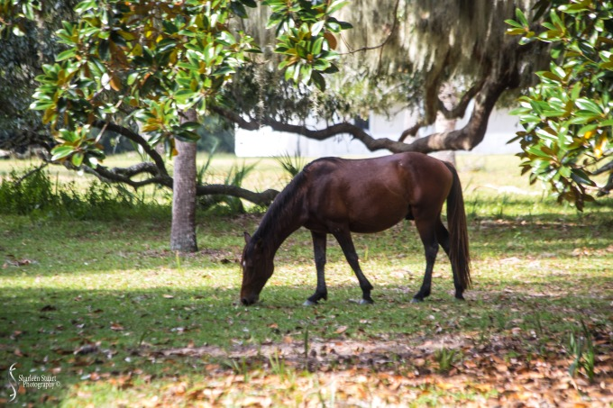 Cumberland Island trip Georgia:  October 11, 2019: 2253
