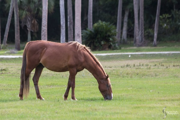 Cumberland Island trip Georgia:  October 11, 2019: 2280