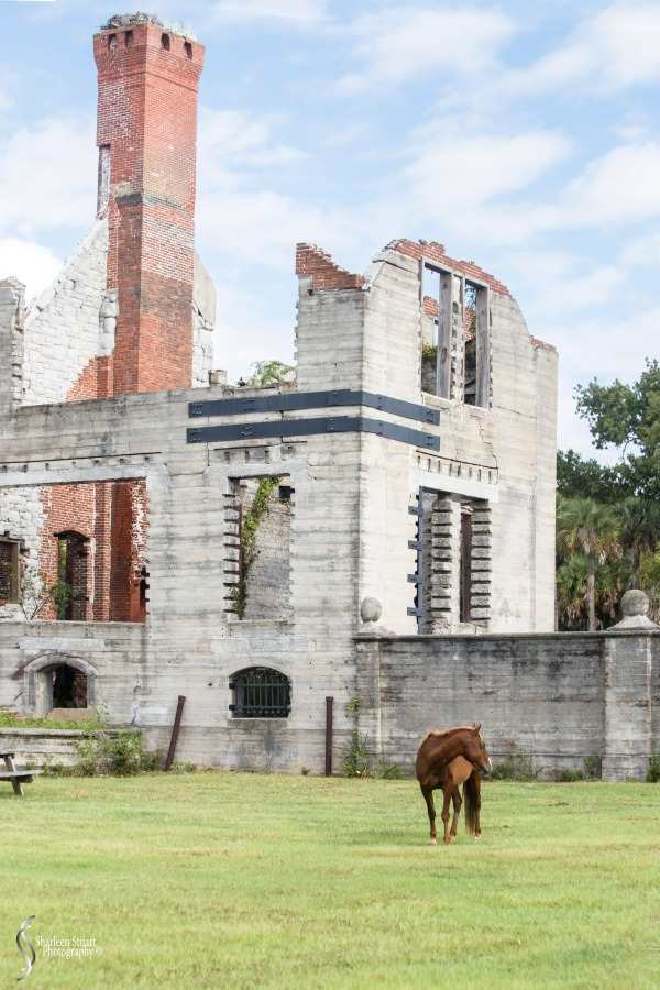 Cumberland Island trip Georgia:  October 11, 2019: 2283
