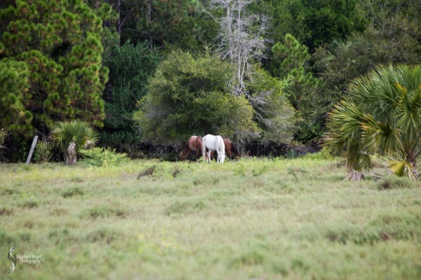Cumberland Island trip Georgia:  October 11, 2019: 2292