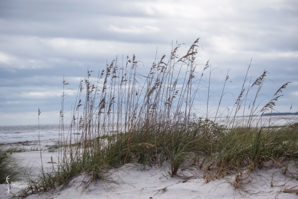 Cumberland Island trip Georgia:  October 11, 2019: 2452