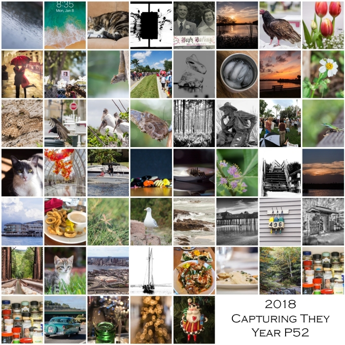 2018 Capturing the Year P52 Project