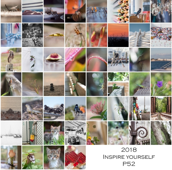 2018 P52 Inspire Yourself Collage