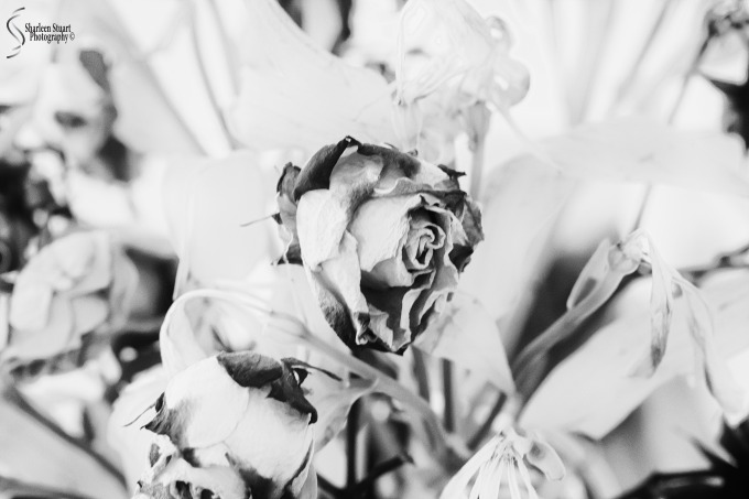 Imperfection: April 1, 2020: 0223