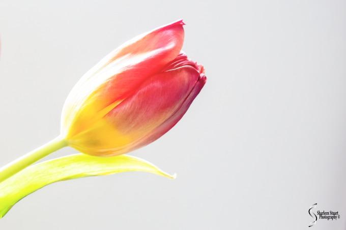 Simplicity:  April 20, 2020: 0327